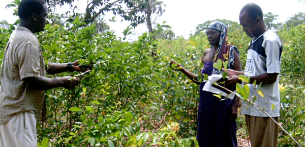 A herbalist providing information on medicinal and food plants occurring in Kaya Kinondo