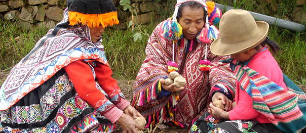 Farmers sharing potatoes in the Potato Park, Peru
