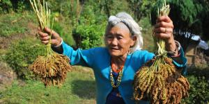 An elderly woman in a field holds crops in the air with both hands